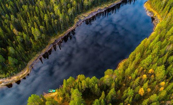 Карельская сосновая тайга. Фото: Shutterstock / SviatlouSS