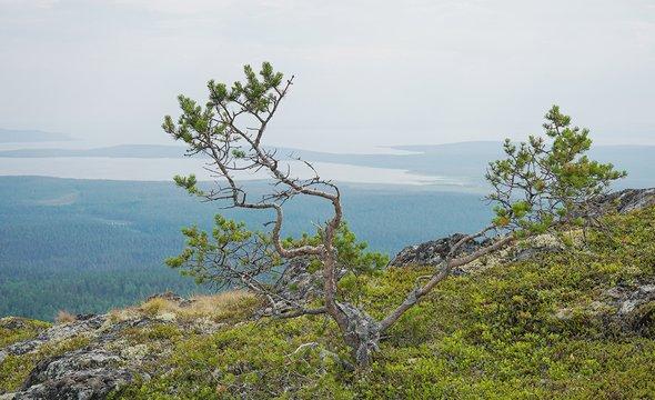 Национальный парк «Паанаярви». Фото: Shutterstock / AKOMIX
