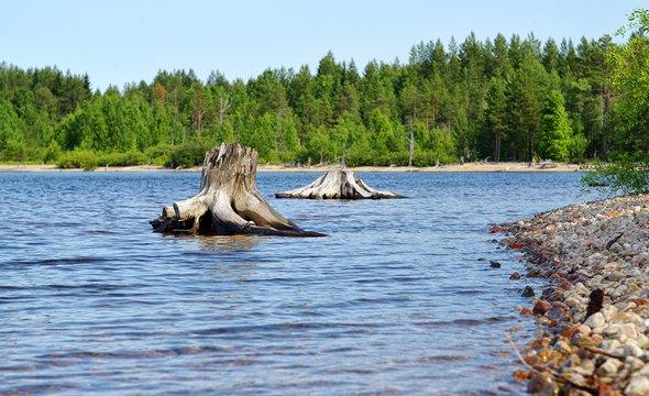 Республики Карелия. Озеро Среднее Куйто. Shutterstock / Yuri Macsimov