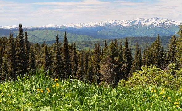 Сибирская тайга. Фото: Shutterstock / Valerii_M