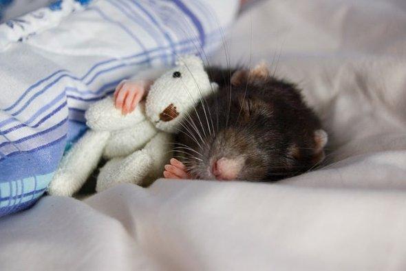 ткань задействует по ночам приходит мышь Мои