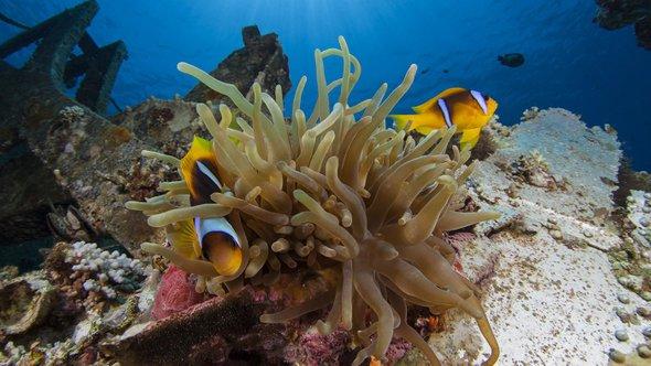 Кораллы вАкабском заливе